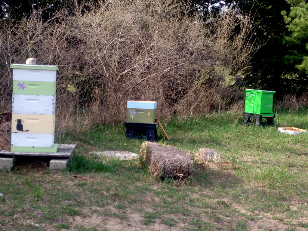 Three of the numerous hives located on the Manistee property.