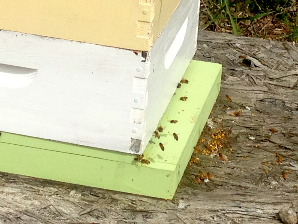 The bees return to their hive after foraging.