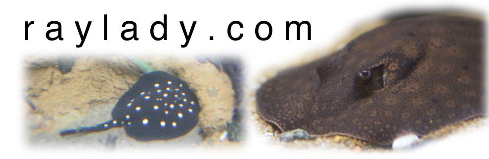 raylady.com
